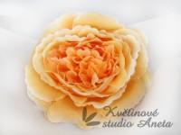 Květ Mary Rose oranžový...