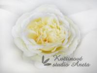 Květ Mary Rose smetanový...