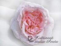 Květ Mary Rose růžový...