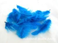 Peří modré tyrkysové...