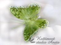 Motýl zelený třpytivý...