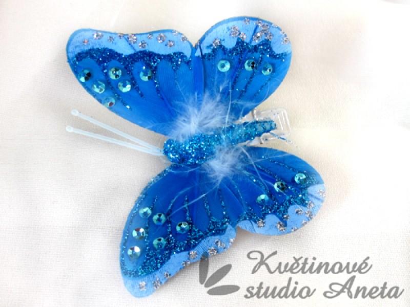 Motýl modrý třpytivý