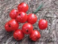 Jablíčka červená svazek 10ks...