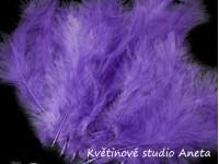Pštrosí peří fialové...