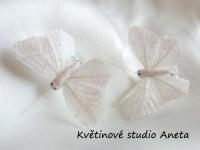 Motýlek bílý...