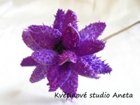 Květ lepený fialový...