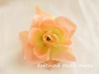 Květ růže s rosou lososový...