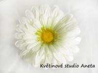Květ gerbera bílá...