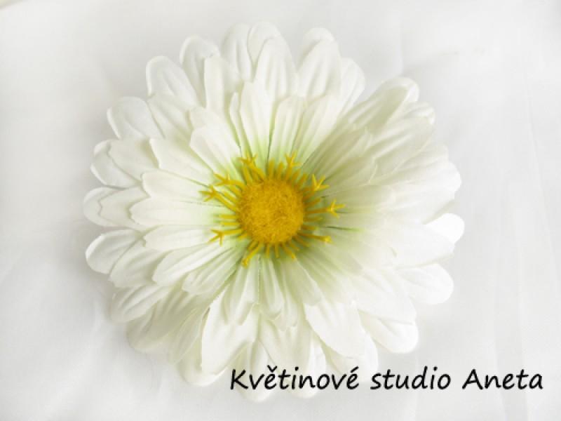 Květ gerbera bílá