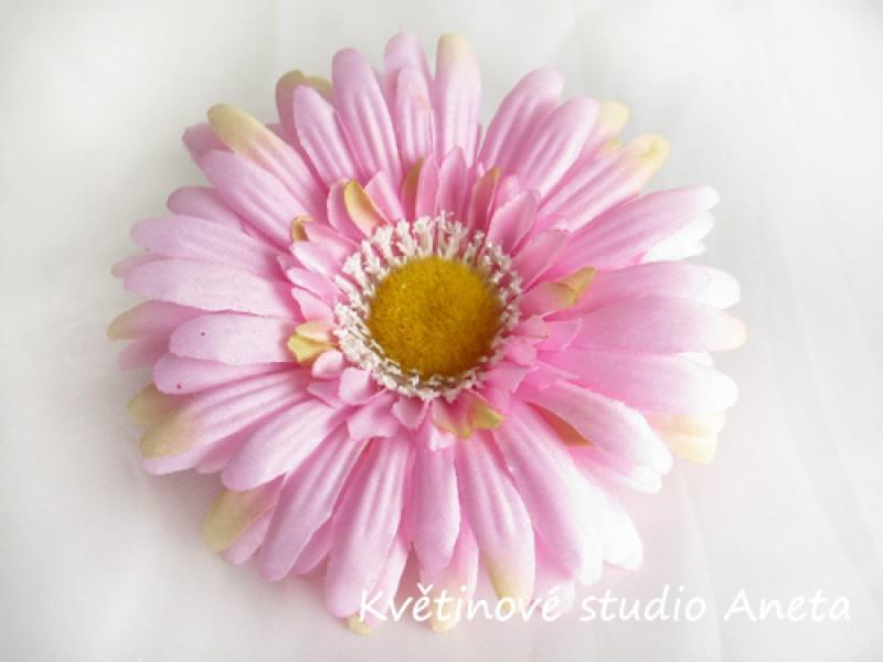 Květ gerbera růžová žíhaná