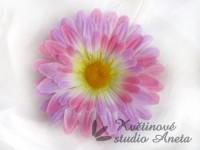 Květ gerbera růžová-fialková...