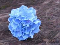 Květ hortenzie modrý...