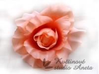 Květ růže lososový...
