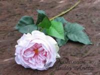 Anglická růže růžová světle...