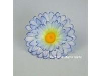 Květ gerbera modrá...