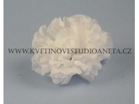 Květ karafiát bílý...