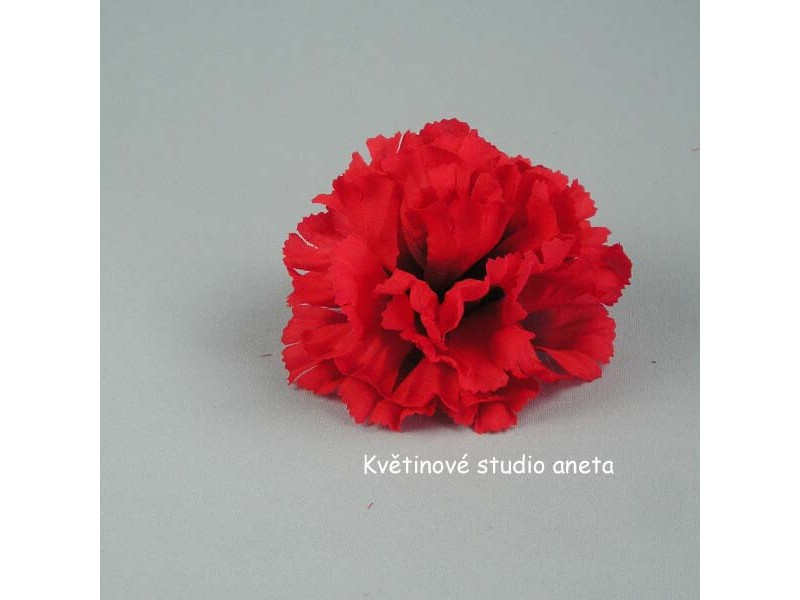 Květ karafiát červený