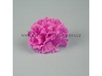 Květ karafiát fialový...