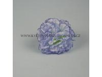Květ karafiát modrý...