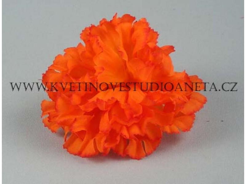Květ karafiát oranžový