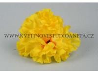 Květ karafiát žluty...