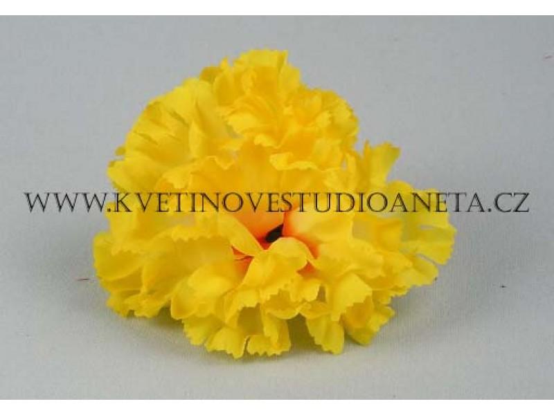 Květ karafiát žluty