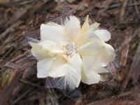 Fascinátor krémová lilie...
